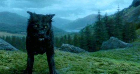 """""""Berry"""" era el nombre verdadero del perro que interpreto a """"Snuffles"""" la version animal de Sirius Black"""